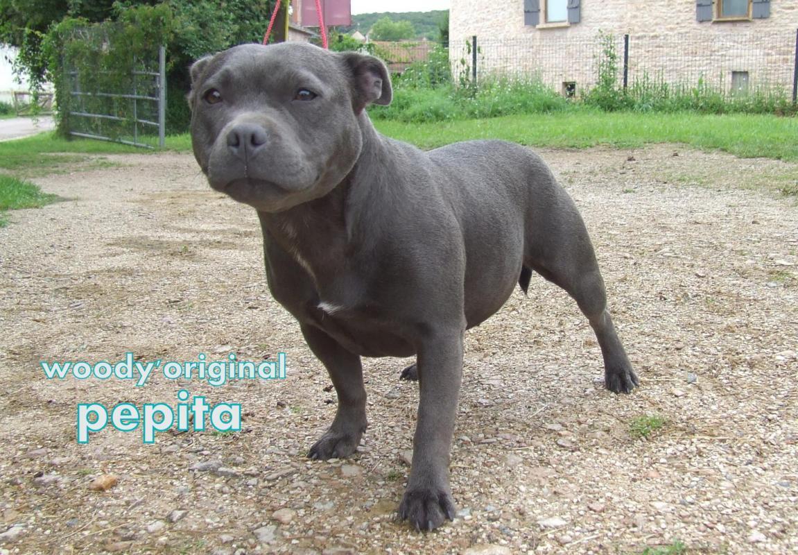 Pepita 023